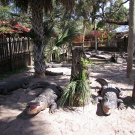 Gators, Gunpowder and Ghosts of St. Augustine, Florida