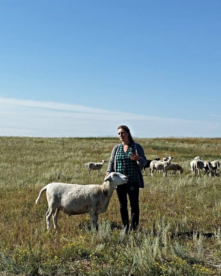 An organic farmer and her family's pet sheep in Saskatchewan under a blue sky